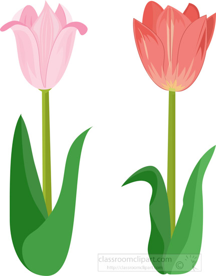 two-tulips-side-by-side-pink-with-leaf-clipart.jpg