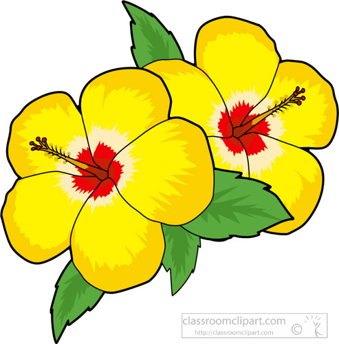 two-yellow-hibiscus-flower-clipart.jpg