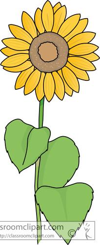 yellow_sunflower.jpg
