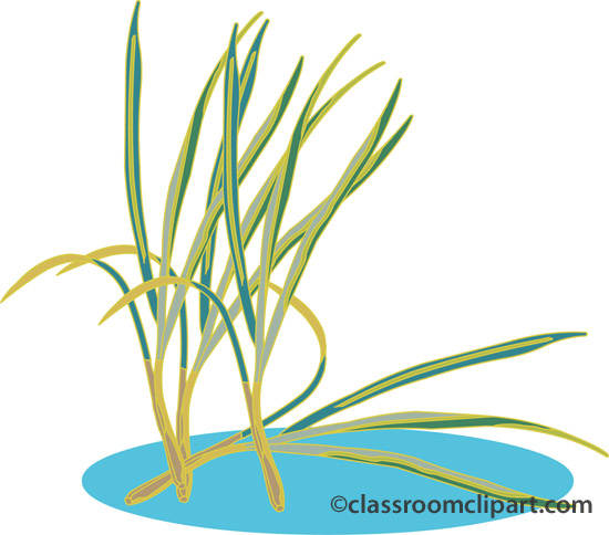 lemon_grass.jpg