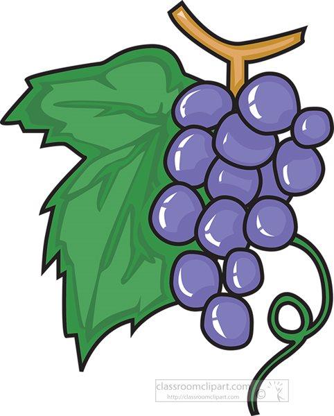 fresh-purple-grapes-on-stem-clipart.jpg