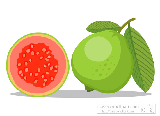 guava-fruit-clipart-318.jpg