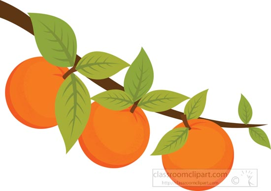 oranges-growing-on-tree-branch-clipart.jpg