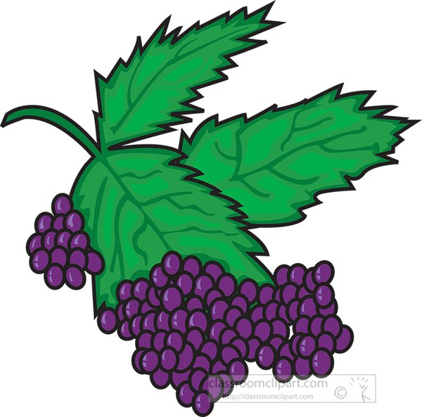 purple-grapes-with-leaves-clipart.jpg