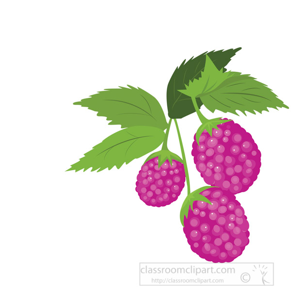 raspberry-plant-fruit-with-stem-and-leaf-vector-clipart.jpg