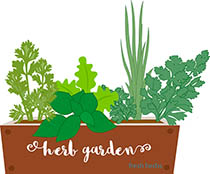 Charming Herbs Growing In Garden Container Clipart. Size: 193 Kb