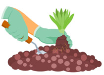 Planting Small Plant In Soil Gardening Clipart Size 70 Kb From