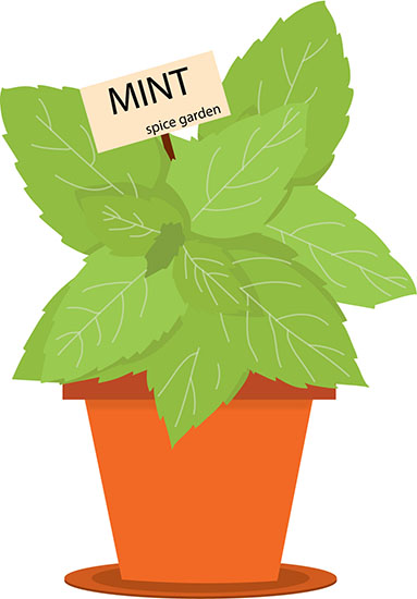 mint-spice-garden-growing-pot-23-clipart.jpg