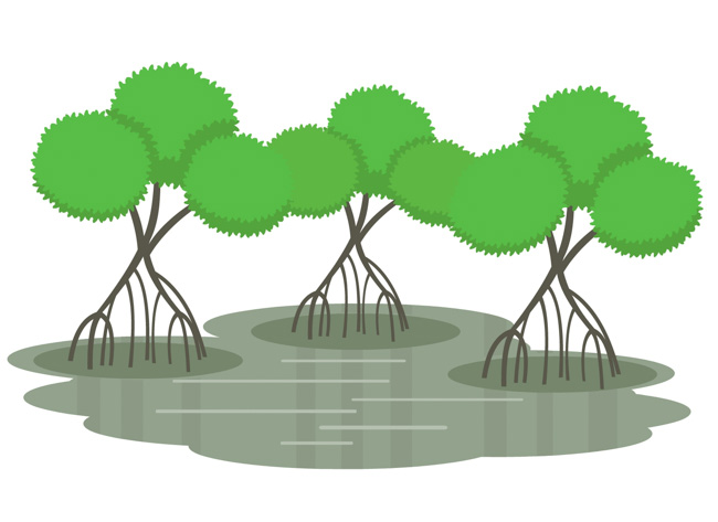 mangrove-swamp-biome-clipart.jpg