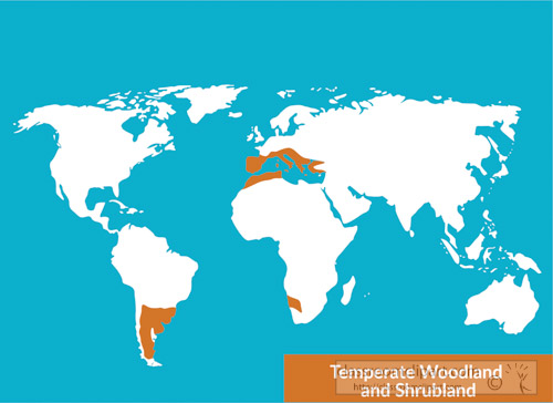 Geography Clipart temperatewoodlandandshurblandmapbiome