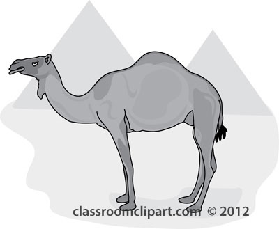 Camel_in_front_of_egypt_pyramids_212_gray.jpg