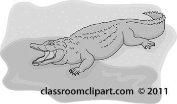 aligator--gray-color-2012-25.jpg
