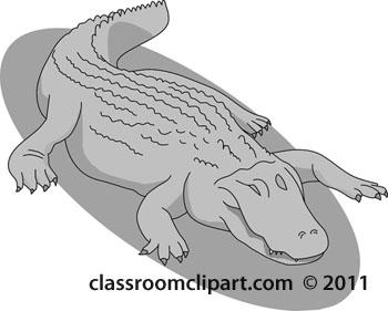aligator-3-gray-122012.jpg