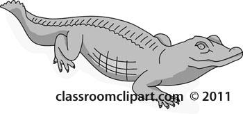 aligator-reptile-1B-2012-gray.jpg