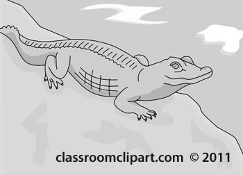 aligator_1B-2012-12-gray.jpg