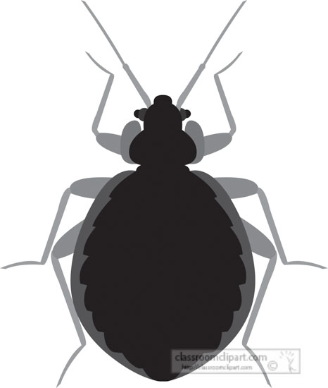 bed-bug-insect-gray-clipart-818.jpg