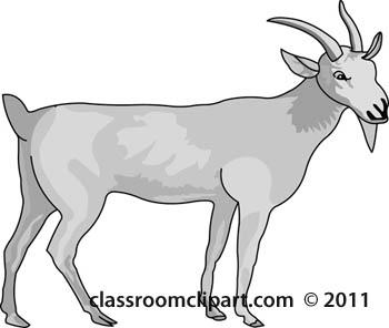billy-goat-animal-gray.jpg