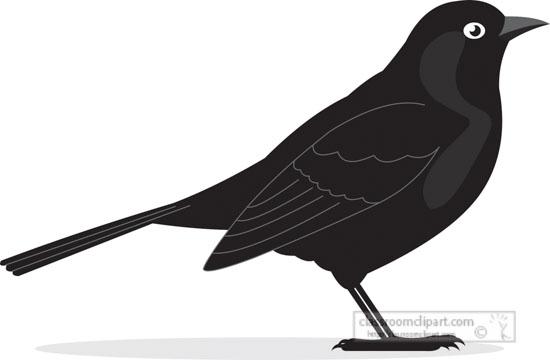 blackbird-bird-gray-clipart.jpg