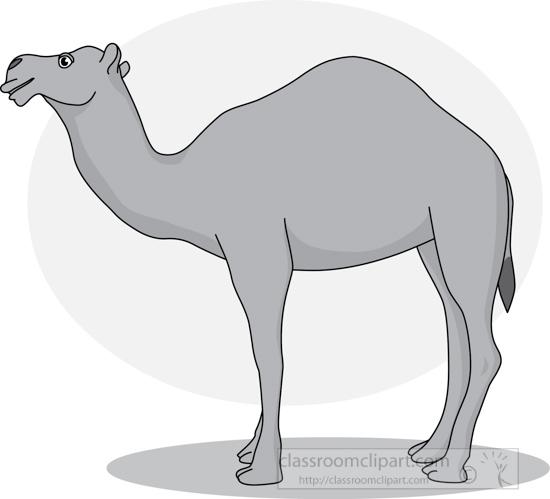 camel_31412_03_gray.jpg