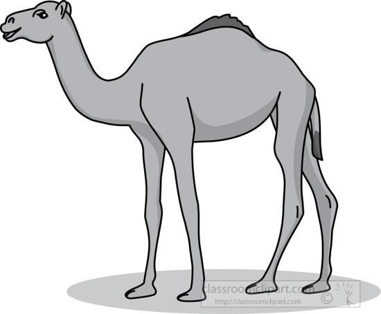 camel_31412_04_gray.jpg