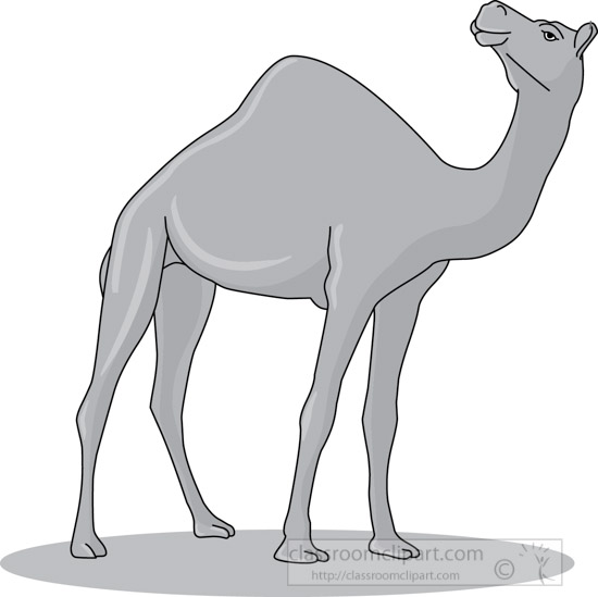 camel_31412_07_gray.jpg