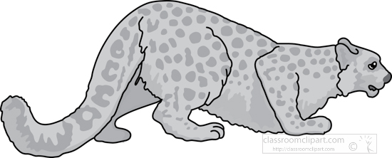 cheetah_327_1A_gray.jpg