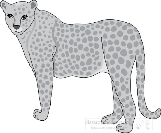 cheetah_327_2bb_gray.jpg