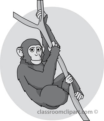 chimpanzee_in_tree01_gray.jpg