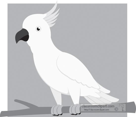 cockatoo-bird-gray-clipart.jpg