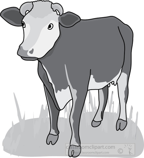 cow_front_view_4A_gray.jpg