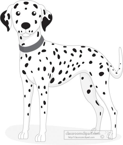 dalmatian-dog-red-collar-gray-clipart.jpg