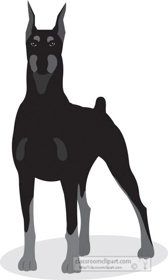 dobermann-dog-gray-clipart.jpg
