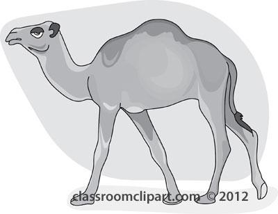 dromedary_camel_3_212_gray.jpg