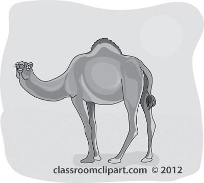 dromedary_camel_4_212b_gray.jpg