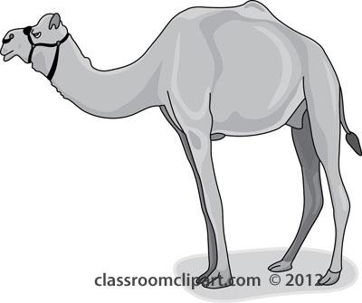 dromedary_camel_gray_212.jpg