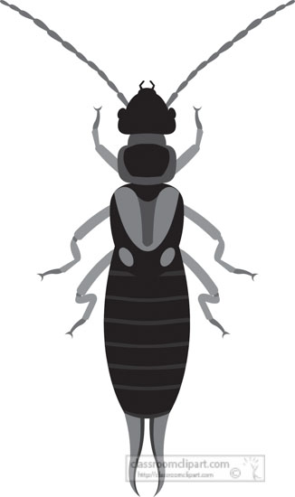 earwig-insect-gray-clipart-818.jpg