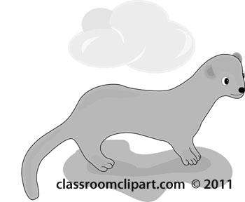 ferret-gray.jpg