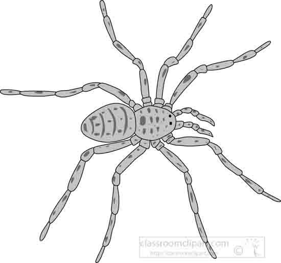garden_spider_grayscale_04_22912.jpg