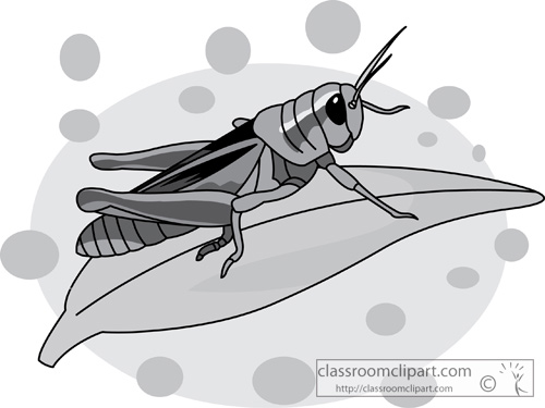 grasshopper_on_a_leaf_gray_2.jpg