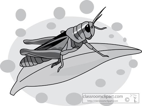 grasshopper_on_a_leaf_gray_2.jpg