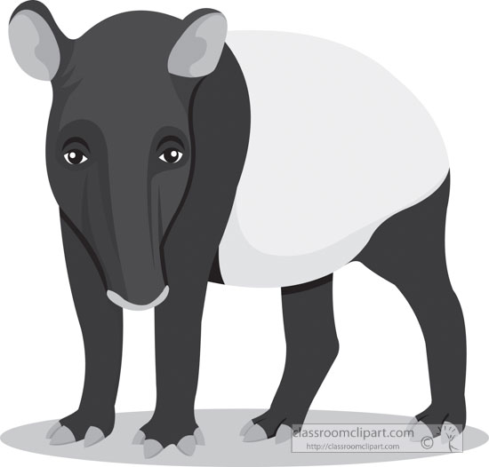 gray-clipart-herbivore-mammal-tapir-animal.jpg