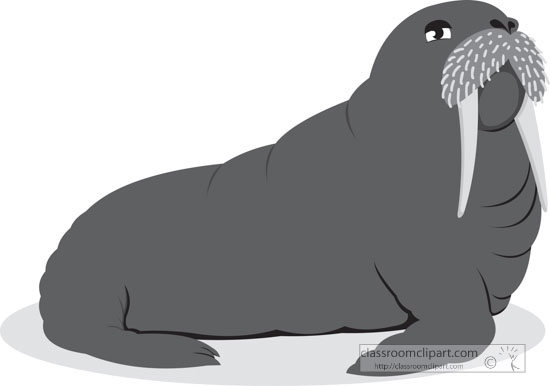 gray-clipart-of-walrus-with-tusk-whiskers.jpg