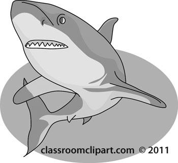 gray-shark-06-12.jpg