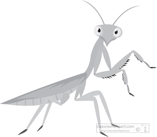 green-praying-mantis-insect-gray-clipart.jpg