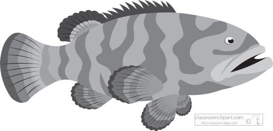 grouper-marine-life-gray-clipart.jpg