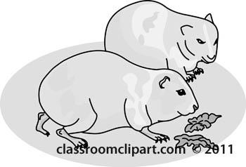 guinea-pigs-gray.jpg