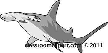 hammerhead-shark-gray.jpg