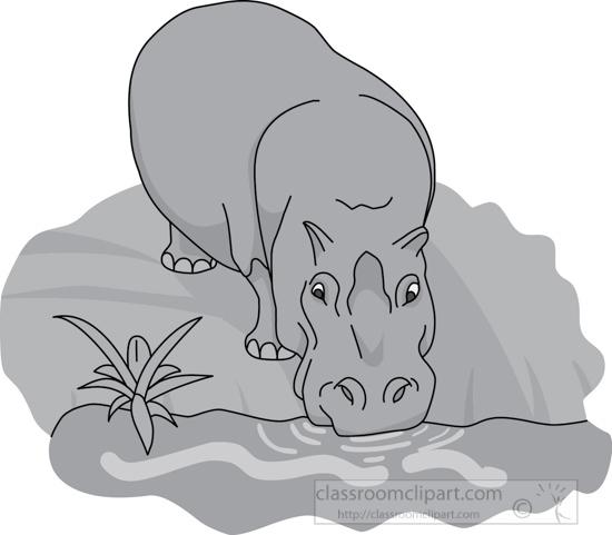 hippopotamus_drinking_water_212_4_gray.jpg