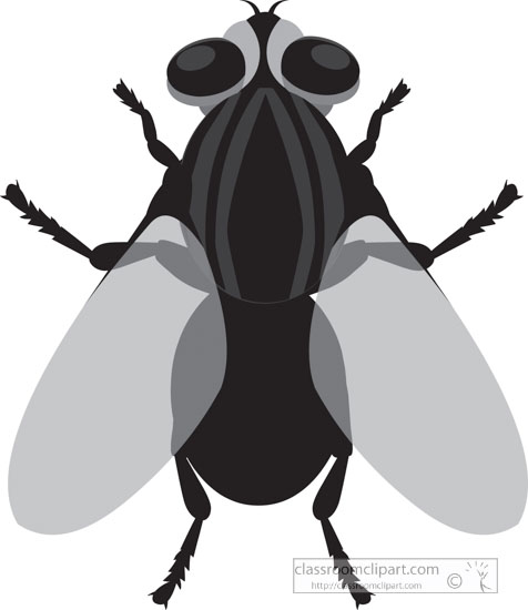 house-fly-insect-gray-clipart.jpg