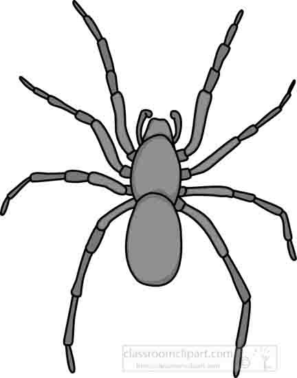 house_spider_grayscale_03_22912.jpg